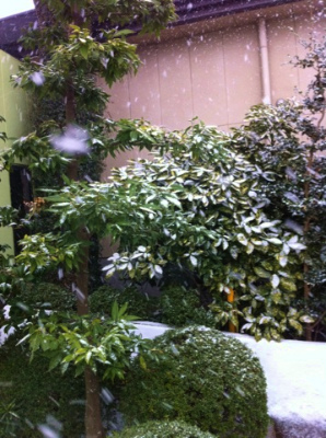 s雪やこんこん