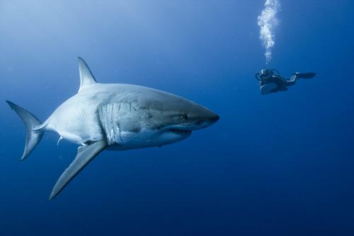 オーシャンズ 鮫と人