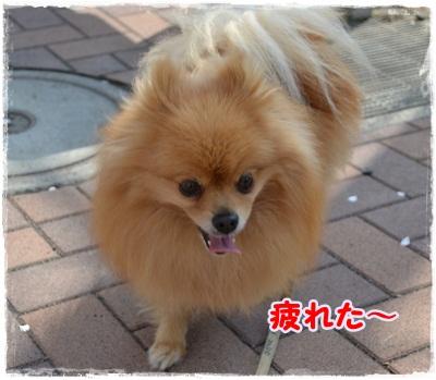 DSC_0709_20130324203619.jpg