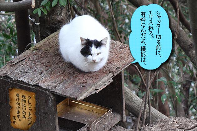 20120116cat02_20120116232916.jpg