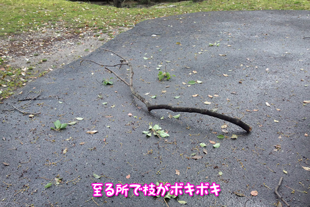 20120403hiroshimajo03.jpg