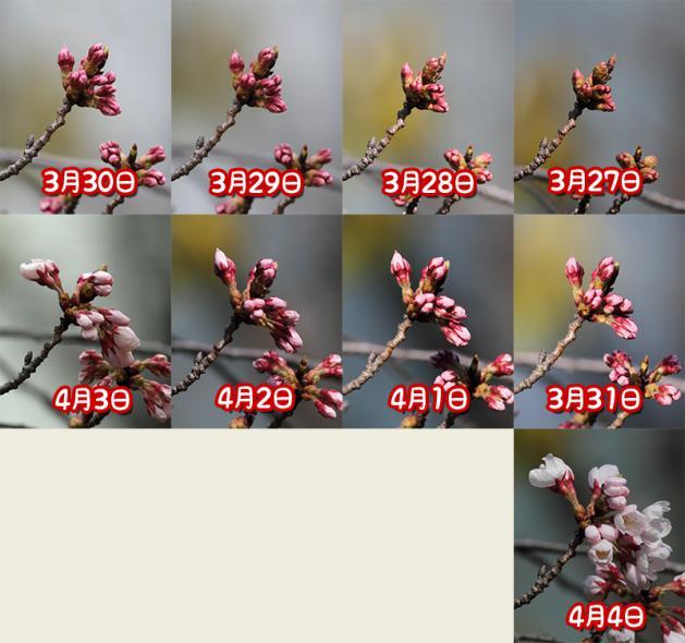 20120404sakura_20120404230951.jpg
