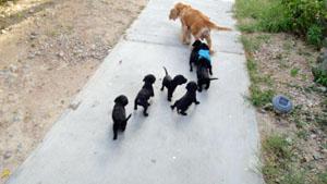 puppyandmom.jpg