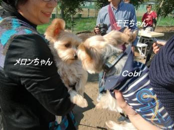 メロンちゃん&モモちゃん