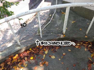 kagawa004-09-2013.jpg