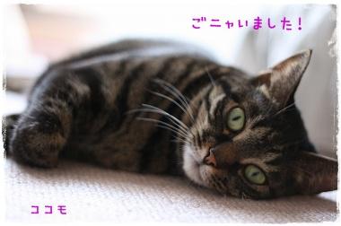 IMG_5257_20091227121752.jpg