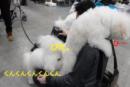IMG_1040_convert_20120210170531.jpg