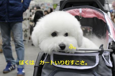 IMG_1047_convert_20120210170650.jpg