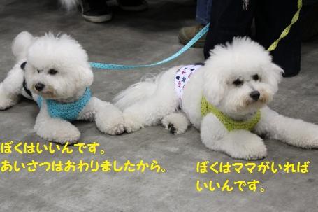 IMG_1105_convert_20120210172624.jpg