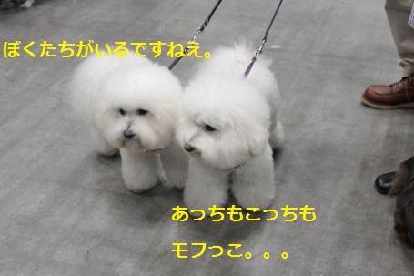IMG_1149_convert_20120210174007.jpg