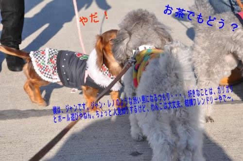 DSC_0575_convert_20100126233815 1