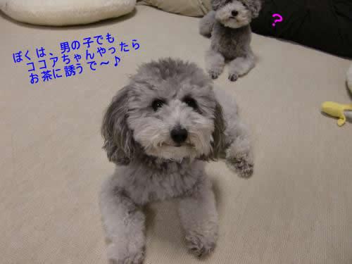001_convert_20100128030658 1