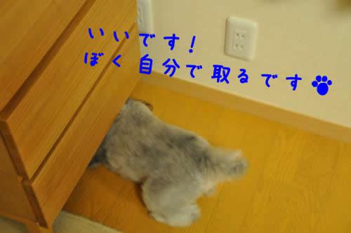DSC_0480_convert_20100306015945 1
