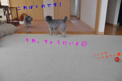 DSC_0287_convert_20100424150816 1
