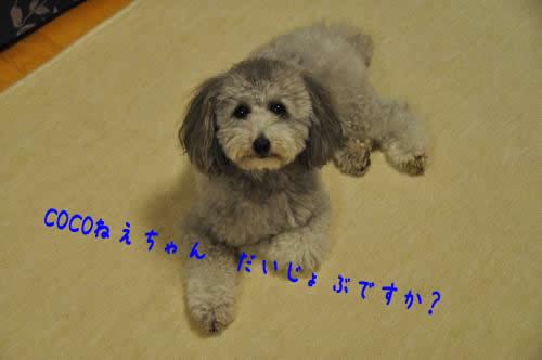 DSC_0129_convert_20100524232548 1