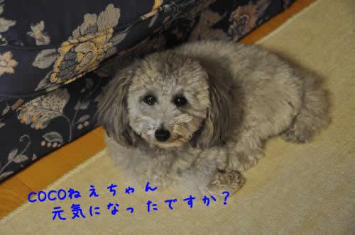 DSC_0132_convert_20100524232650 1