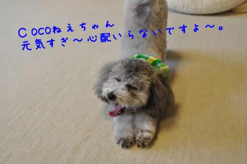 DSC_0564_convert_20100619002055 1