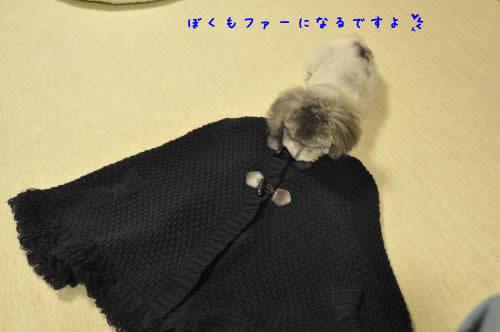 DSC_0912_convert_20100915225124