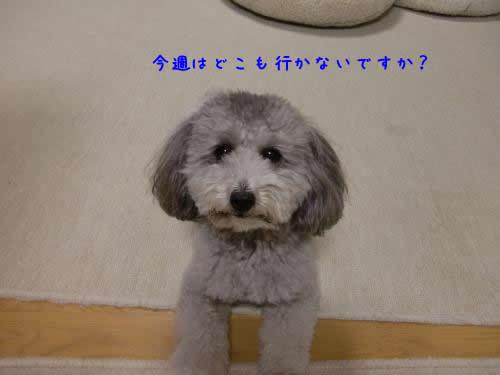 003_convert_20101031230847 1