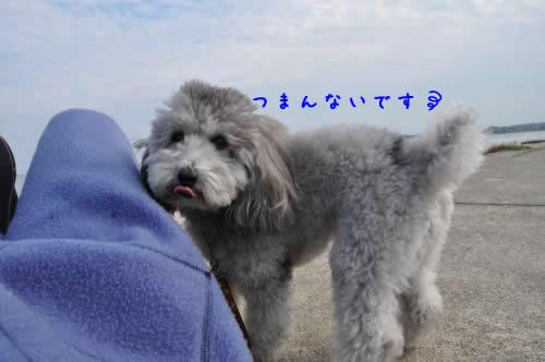 DSC_0854_convert_20101113162007 1