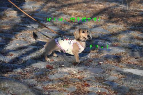 DSC_0983_convert_20101123035423 1