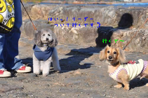 DSC_0016_convert_20101123033848 1