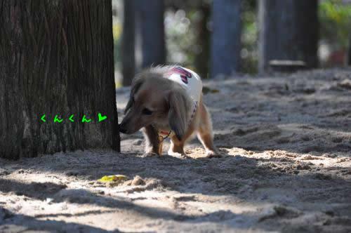 DSC_0109_convert_20101123034912 1