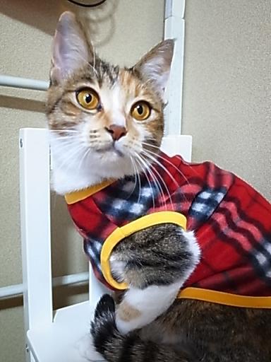 猫ちゃんタンクトップ