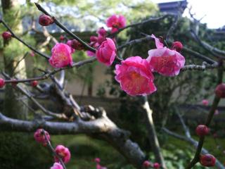 PIC_3027blog.jpg