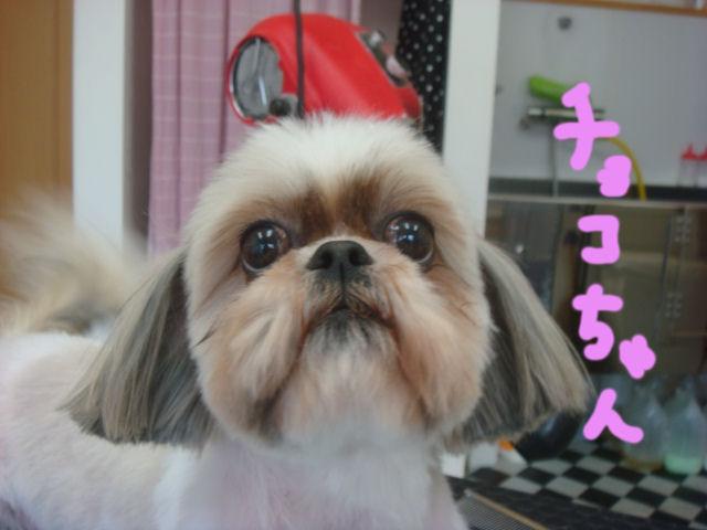 DSC02322blog.jpg