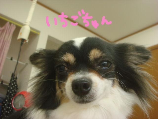 DSC02371blog.jpg