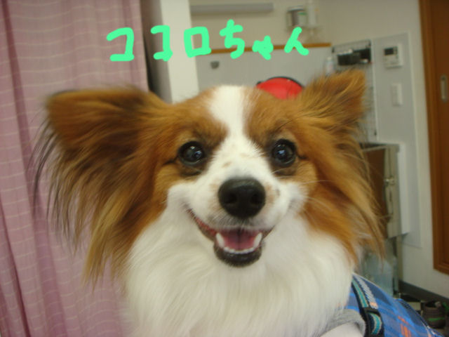 DSC02482blog.jpg