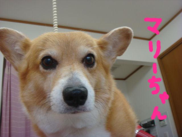 DSC02586blog.jpg