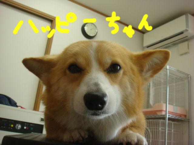 DSC02608blog.jpg