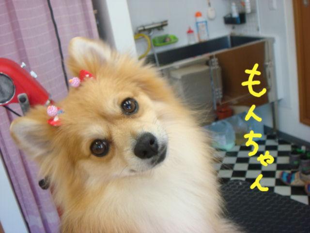DSC02624blog.jpg