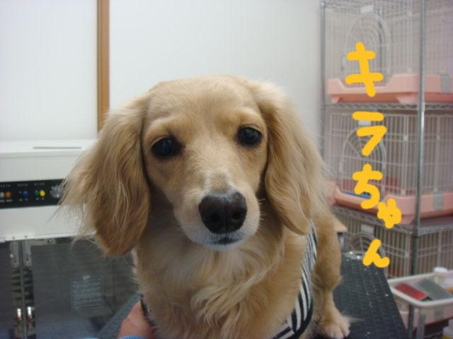 DSC02678blog.jpg