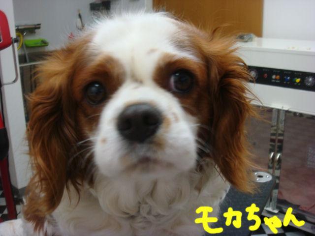 DSC02876blog.jpg