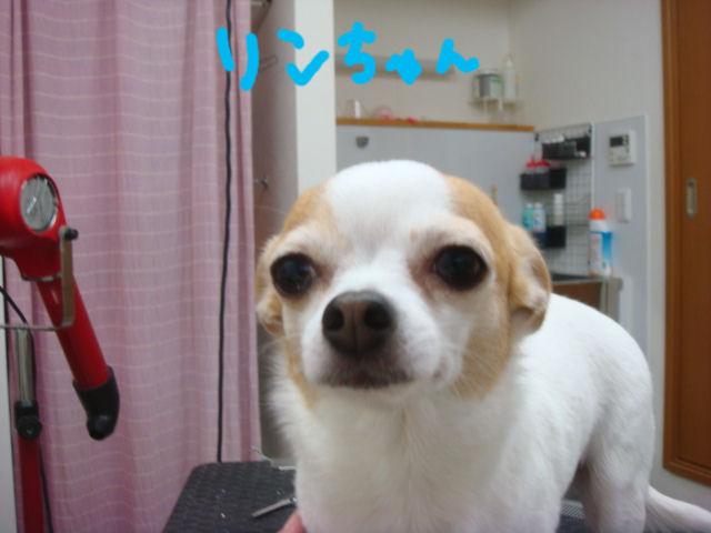 DSC02905blog.jpg