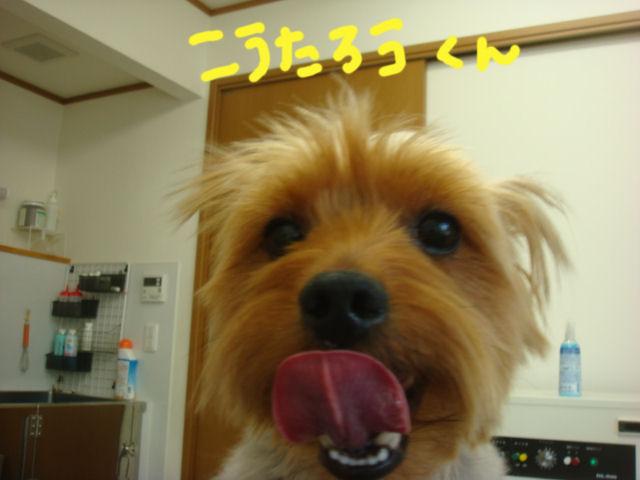 DSC02916blog.jpg