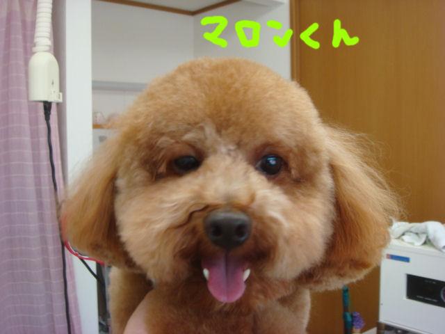 DSC02937blog.jpg
