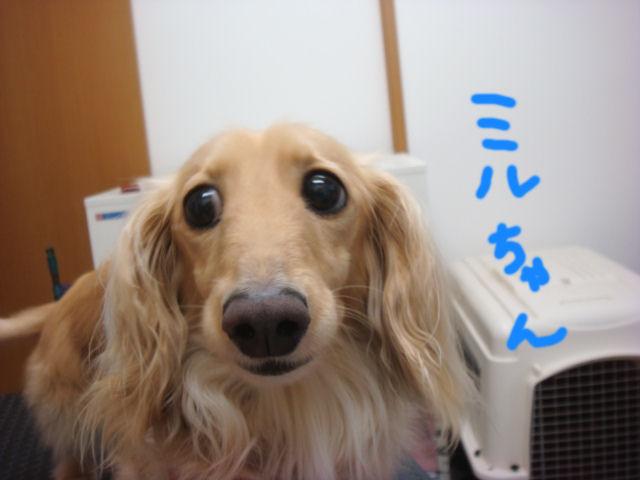 DSC03108blog.jpg