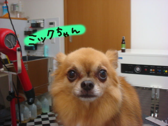 DSC03368blog.jpg
