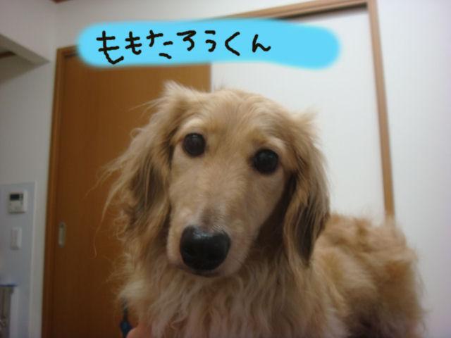 DSC03417blog.jpg