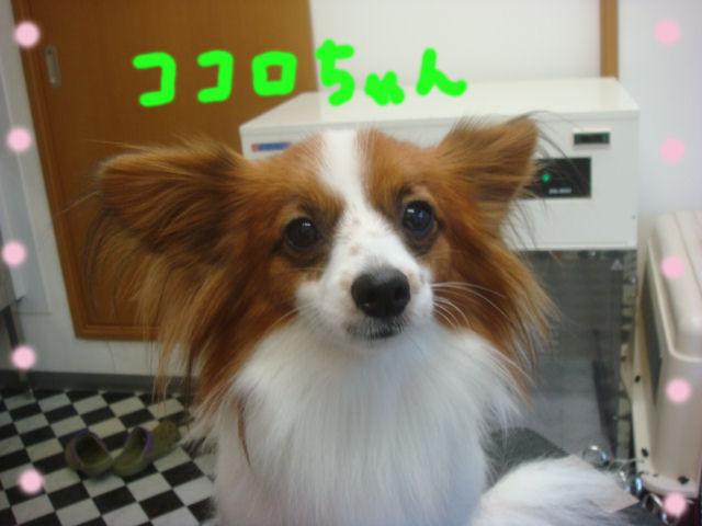 DSC03644blog.jpg