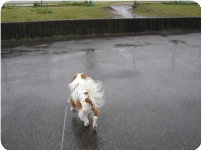 雨の中へ・・・。