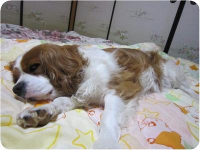 寝てます!!