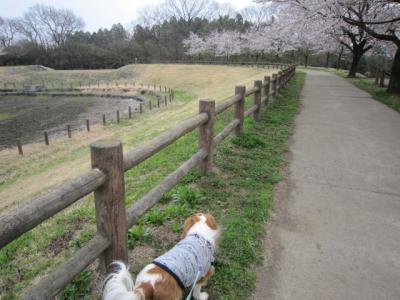 桜咲きました!!