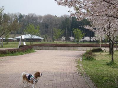 桜とともに・・・。