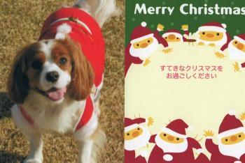 クリスマスカード!!