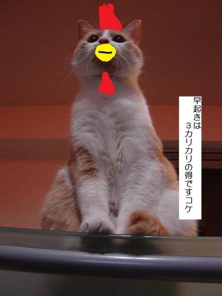 067_convert_20110812001245.jpg